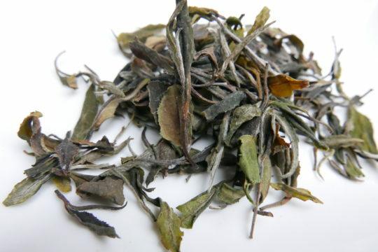 té blanco salvaje